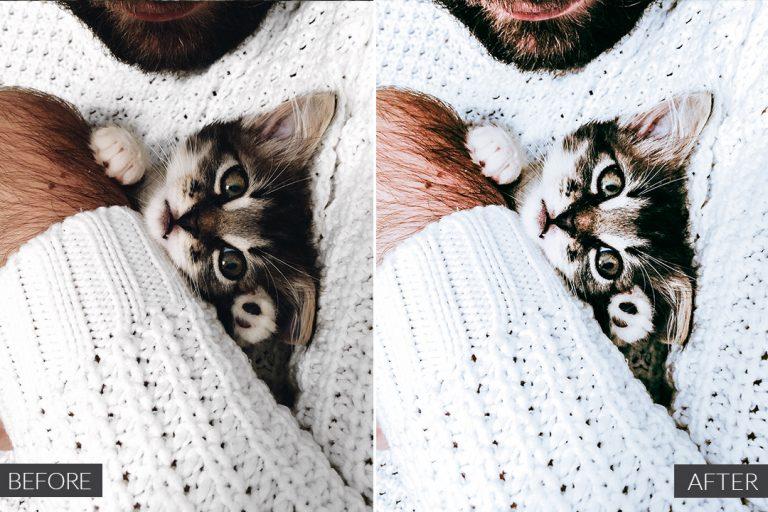 cat-lover-ba-1